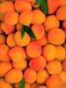 Apricot, CO