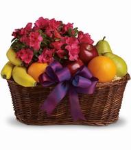 Magnifique panier de plante et fruits