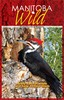 Manitoba Wild - Scenic Secrets of Manitoba