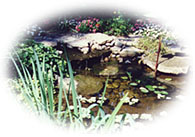 How To Build A Pond With Flexible Liner