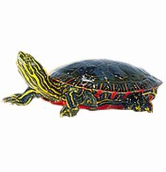 Turtle Supplies