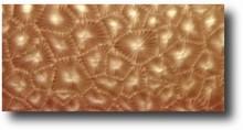 Feuilles texture modèle no.1