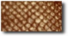Feuilles texture modèle no.2