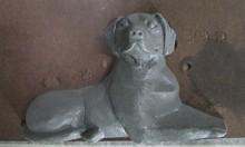 3DA3hg Dog